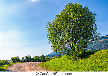 tree on grassy hillside by the road turnaround. lovely...