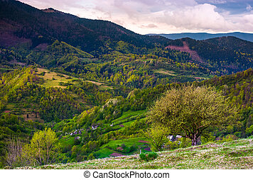 tree on grassy slope of mountainous rural area. Spring has...