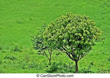 Tree on green background