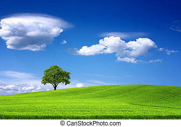 Tree on green field and blue sky