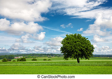 Tree on green field and cloudy sky