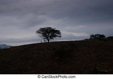 tree on hill dark