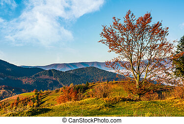 tree on hillside on autumn mountains. beautiful bright...
