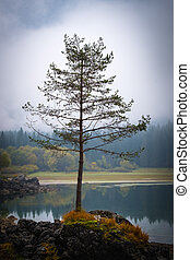 Tree on lake Laghi Fusine with reflections on foggy morning