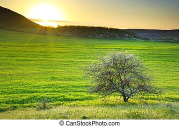 Tree on meadow