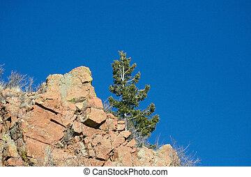 Tree on Ridge