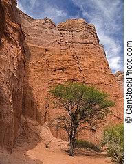 Tree on rocky mountains