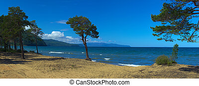 Tree on sandy coast of Lake Baikal. Russia