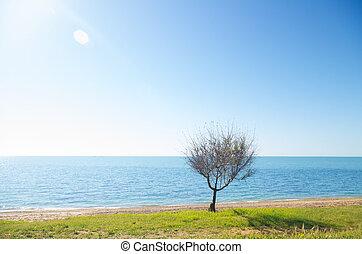tree on sea shore