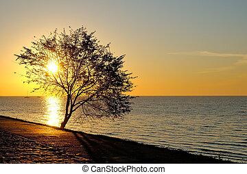 Tree on seaside at sunrise