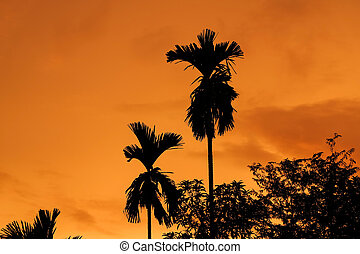Tree on silhouette sunset