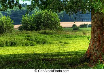 Tree on summer field