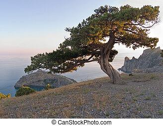 tree on sun rays