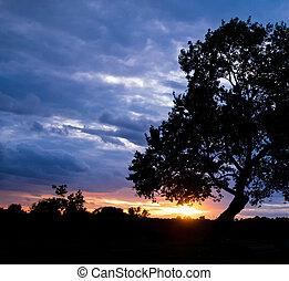 tree on sunset background