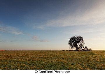 Tree on sunset