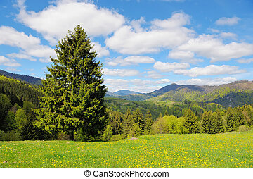 Tree on the background of the mountains
