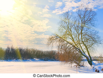 tree on the bank of a frozen river in rays of sun