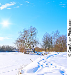 tree on the bank of a frozen river in sunny day