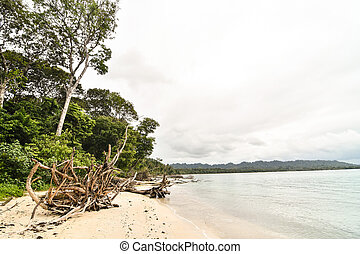 tree on the beach, photo as a background