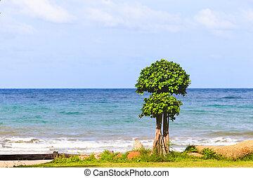 Tree on the beach with blue sky