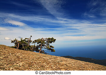 Tree on the blue sky background