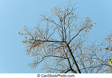 Tree on the blue sky