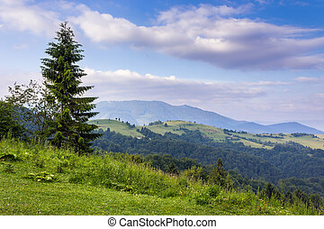 tree on the edge of clearing in mountains