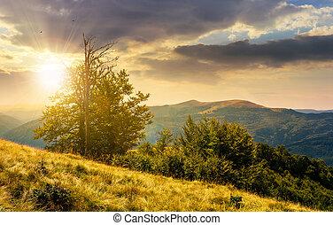 tree on the grassy hillside on at sunset. lovely summer...