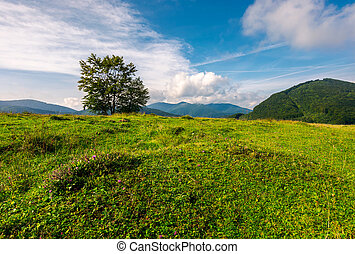 tree on the grassy meadow in mountains. beautiful scenery in...