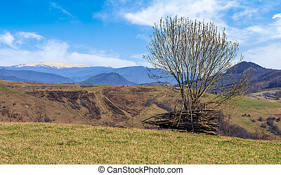 tree on the grassy meadow in mountains with snowy peaks in...