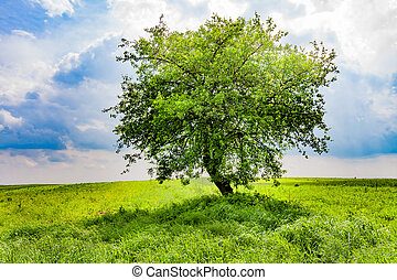 Tree on the green spring meadow