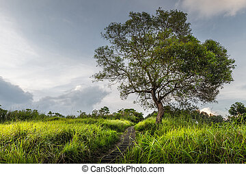 Tree on the meadow