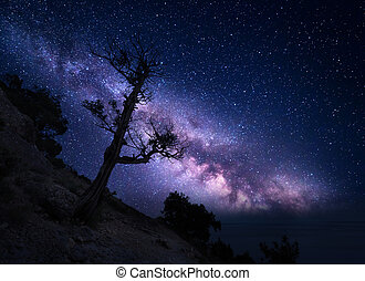 Tree on the mountain against Milky Way. Night landscape