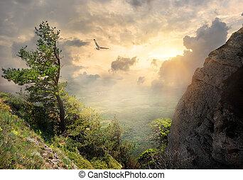 Tree on the mountain