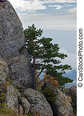 Tree on the mountain, Crimea