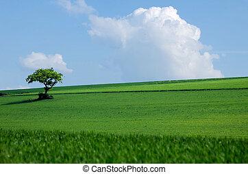 Tree on the prairie