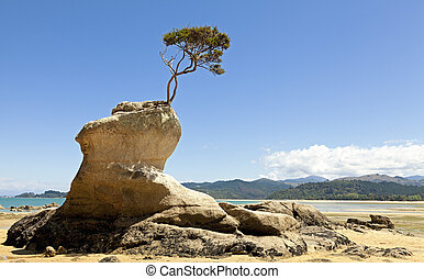 Tree growing out of the rock on the shore of Tasman Bay in New Zealand