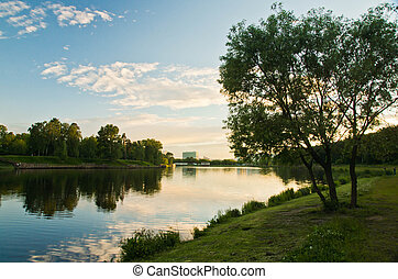 tree on the shore of a pond on a summer evening