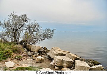 tree on the shore of lake, photo as a background , in saint maries de la mer sea village Camargue, france