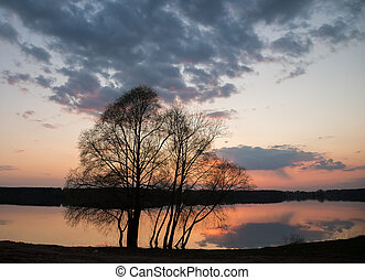Tree on the shore of the pond at sunset