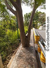Tree on the sidewalk