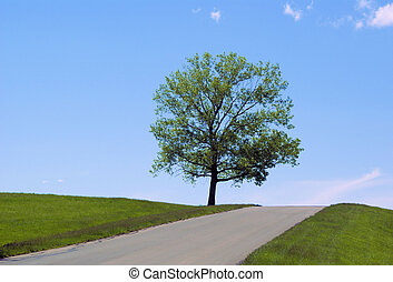Tree on top of hill