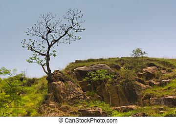 Tree on Top