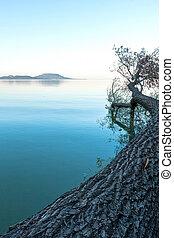 Tree on tre lake