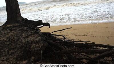 Tree on windy beach