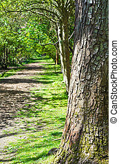 A sun dappled empty woodland path lined with trees. leading into the distance. Large tree in foreground to right of frame. Portrait orientation.