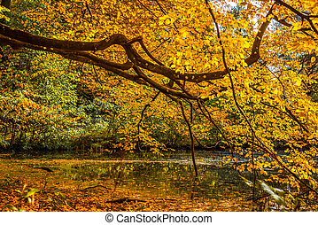 Tree over a lake in the autumn