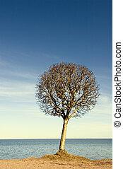 tree over blue sky background