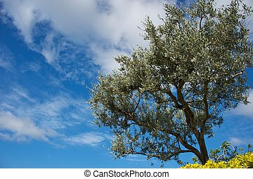 Tree over blue sky.