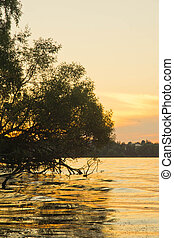 tree over the lake on summer evening